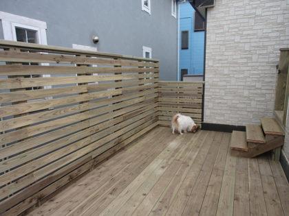 バルコニーウッドデッキで遊ぶ犬